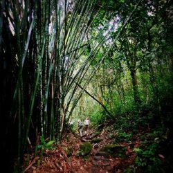 Bambusy w ogrodzie