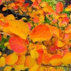 Dlaczego kolor liści zmienia się jesienią?