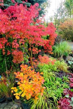 Kolory jesieni Gargul Gaj Gartex